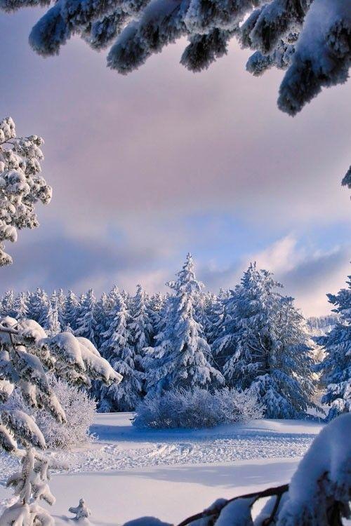 Зимняя природа (8)