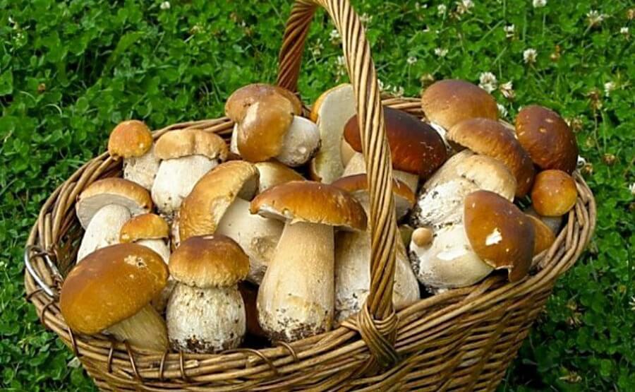 Как можно отличить грибы растения и животных