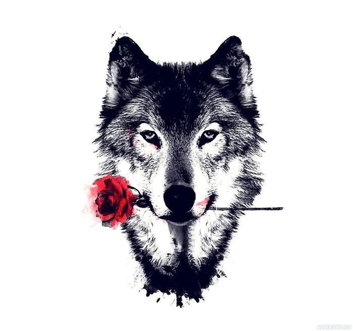 Картинки волк на аву (1)