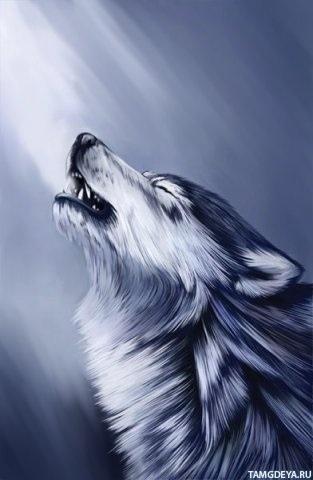 Картинки волк на аву (14)