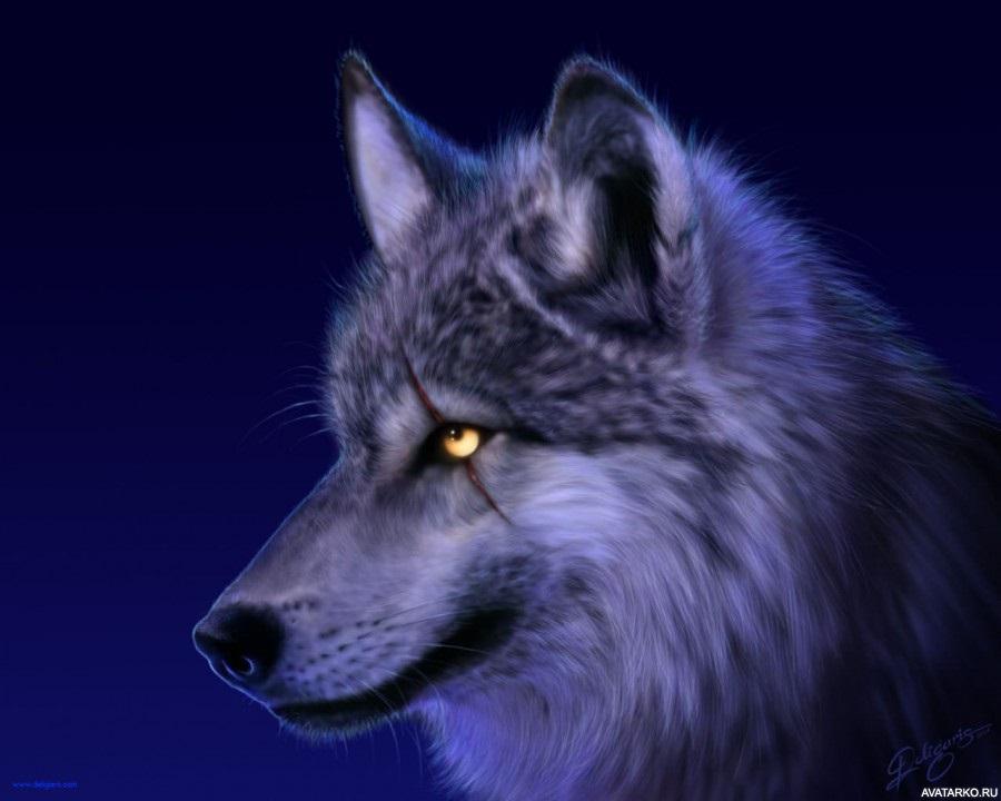 Картинки волк на аву (21)