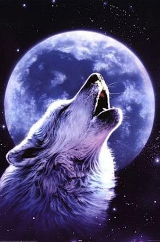 Картинки волк на аву (8)