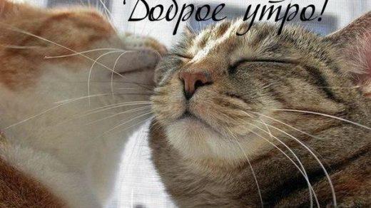 Котенок доброе утро картинки (5)