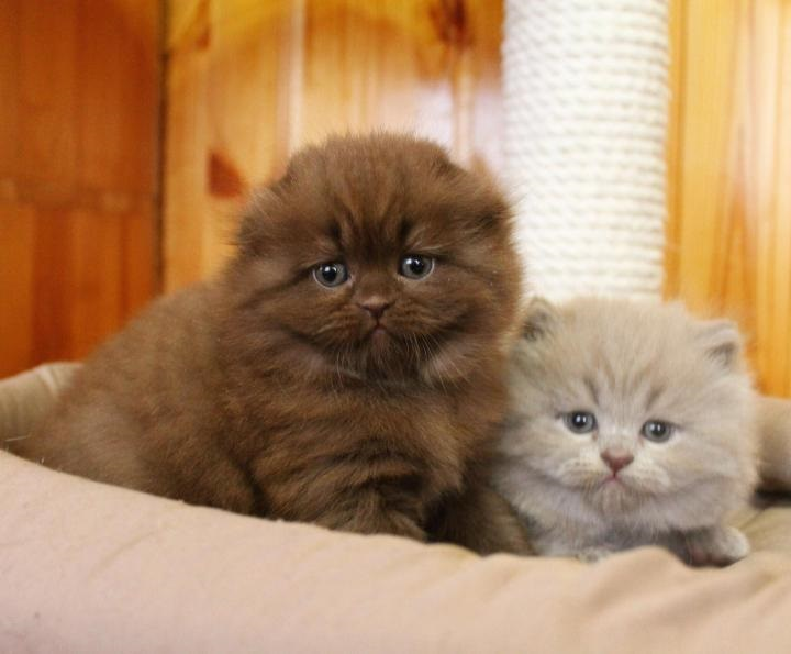 Котята красивые фото (1)