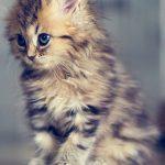 Котята красивые фото