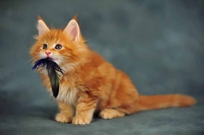 Котята красивые фото (13)
