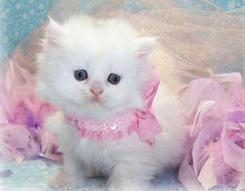 Котята красивые фото (14)