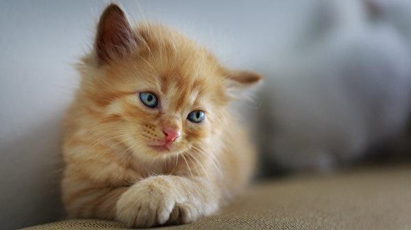 Котята красивые фото (15)