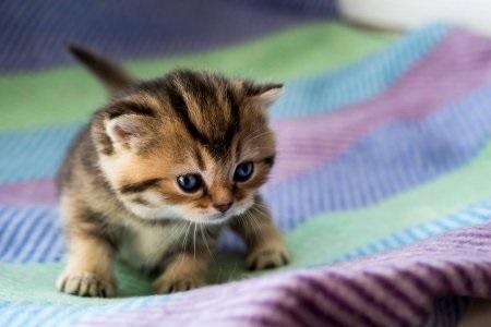 Котята красивые фото (17)