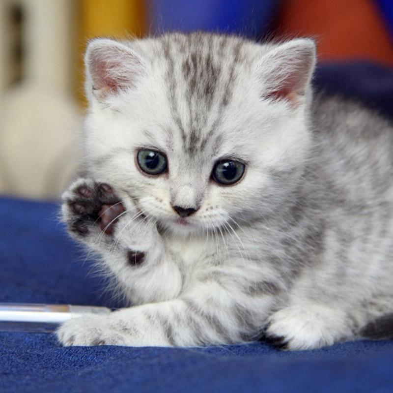 Котята красивые фото (18)