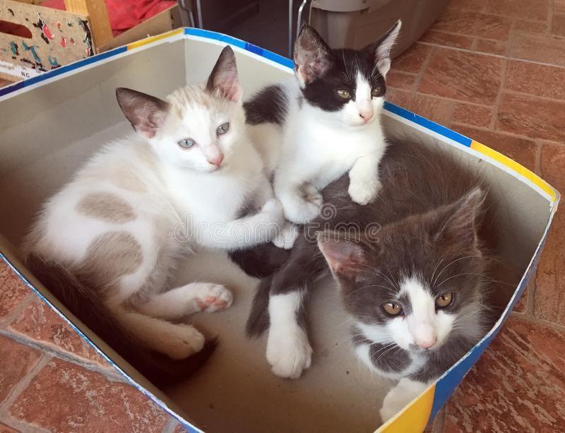 Котята красивые фото (19)