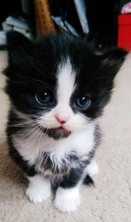 Котята красивые фото (2)