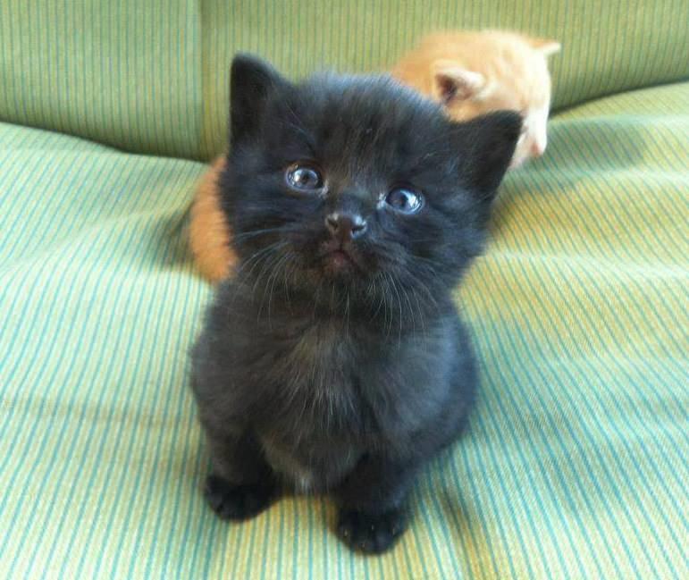 Котята красивые фото (20)
