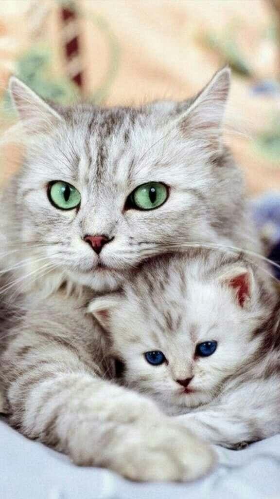 Котята красивые фото (21)