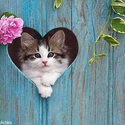 Котята красивые фото (22)