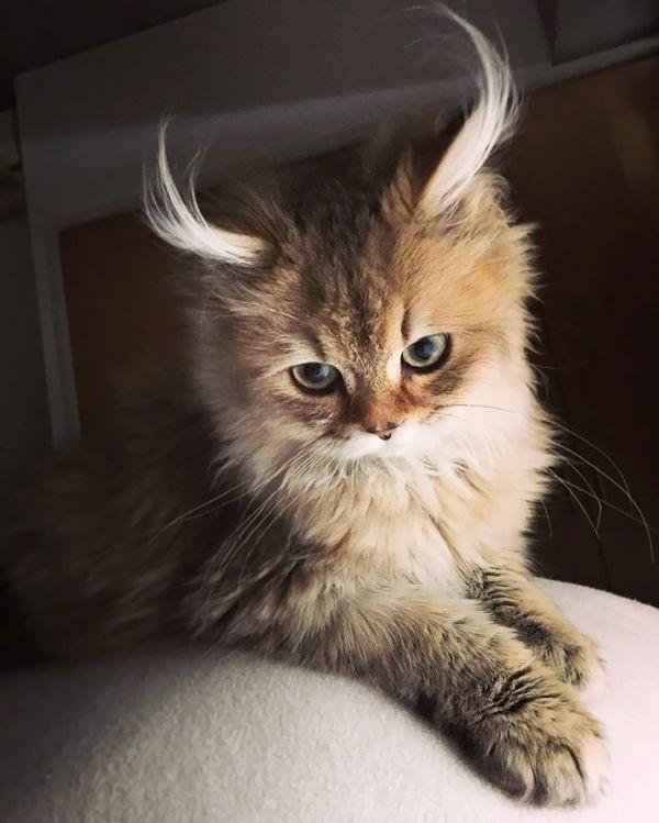 Котята красивые фото (23)