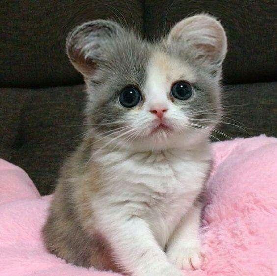 Котята красивые фото (24)