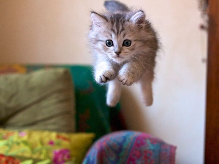 Котята красивые фото (3)