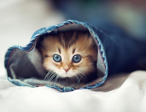 Котята красивые фото (4)