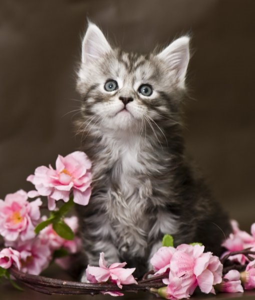 Котята красивые фото (5)