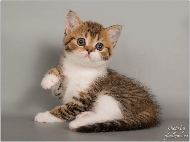 Котята красивые фото (6)