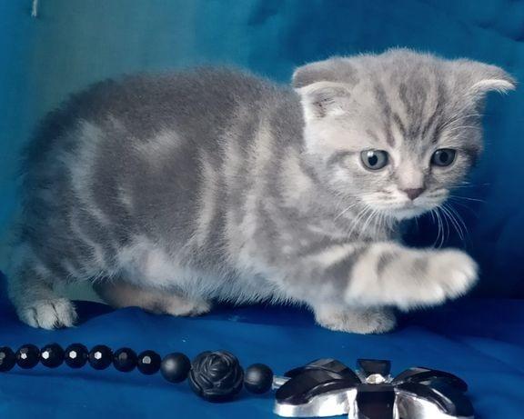 Котята красивые фото (7)