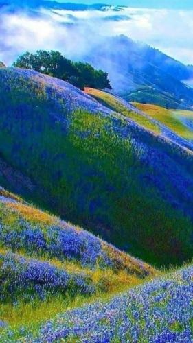 Красивая природа (3)