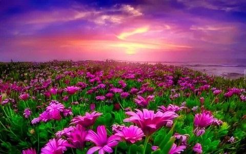 Красивая природа (4)