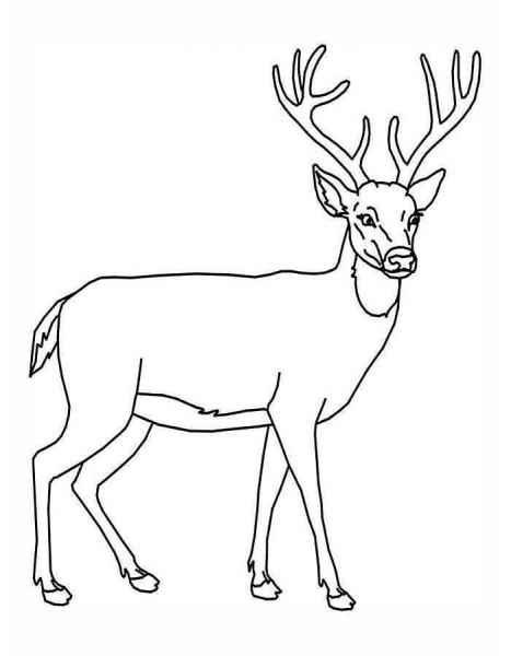 Красивые рисунки для срисовки олень (16)