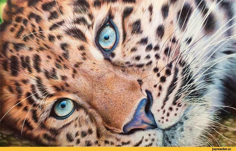 Леопард красивые картинки (18)