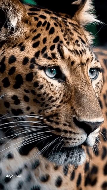 Леопард красивые картинки (3)