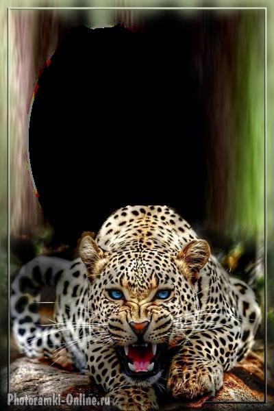 Леопард красивые картинки (9)