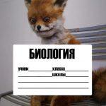Обложки мемы для тетрадей распечатать