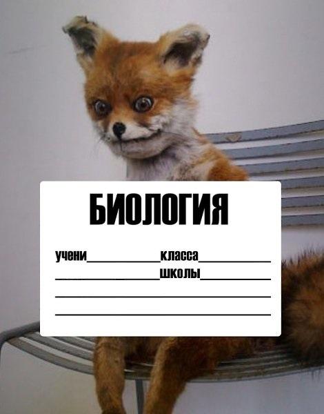 Обложки мемы для тетрадей распечатать (7)