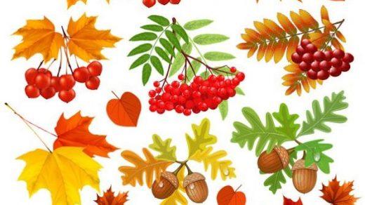 Осенние листья арт картинки (22)