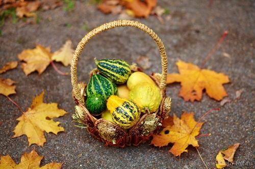 Осенняя фотография ребенка (8)