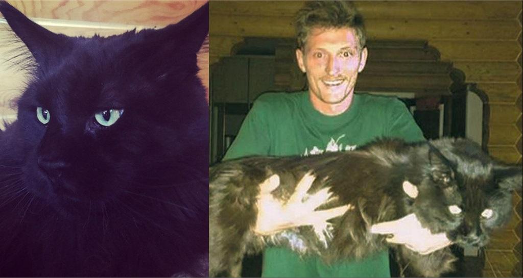 Популярные фото Павла Воли с котом (1)