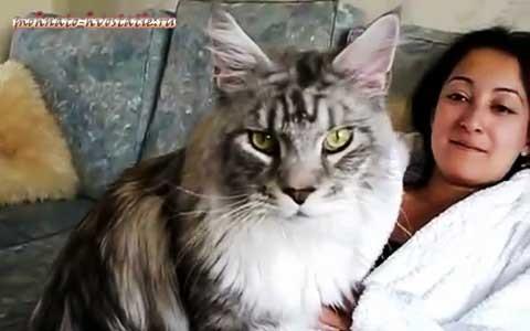 Популярные фото Павла Воли с котом (10)