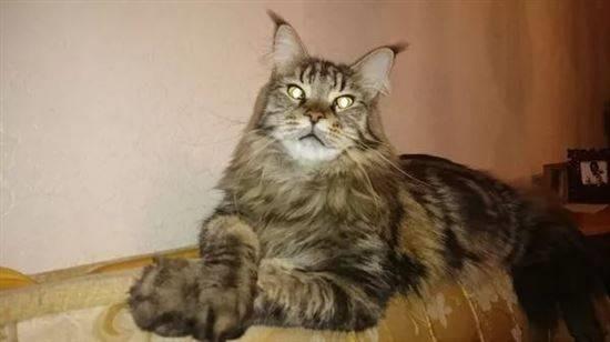 Популярные фото Павла Воли с котом (11)