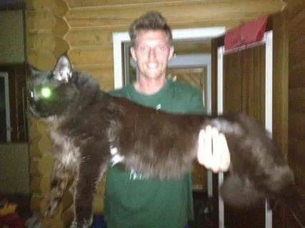 Популярные фото Павла Воли с котом (13)
