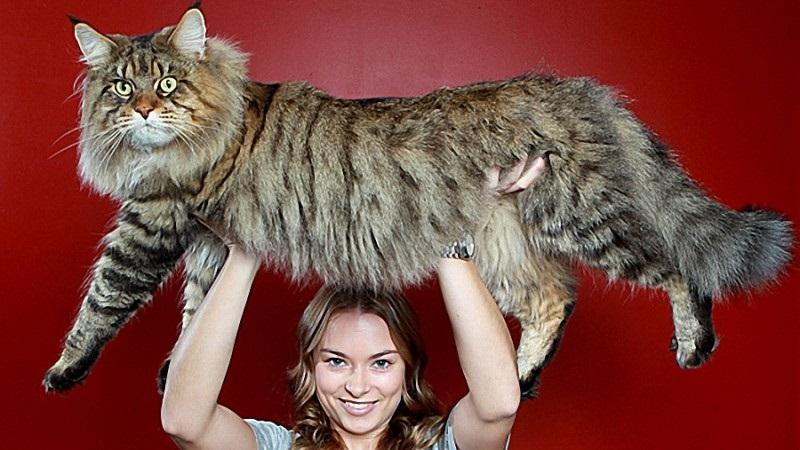 Популярные фото Павла Воли с котом (18)