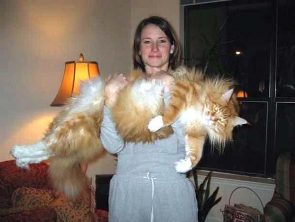 Популярные фото Павла Воли с котом (5)