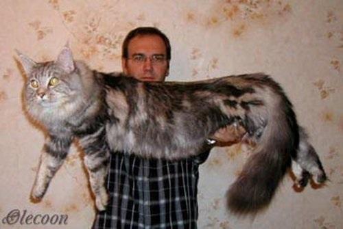 Популярные фото Павла Воли с котом (7)
