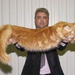 Популярные фото Павла Воли с котом