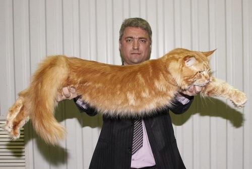 Популярные фото Павла Воли с котом (8)