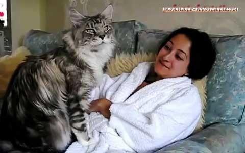 Популярные фото Павла Воли с котом (9)