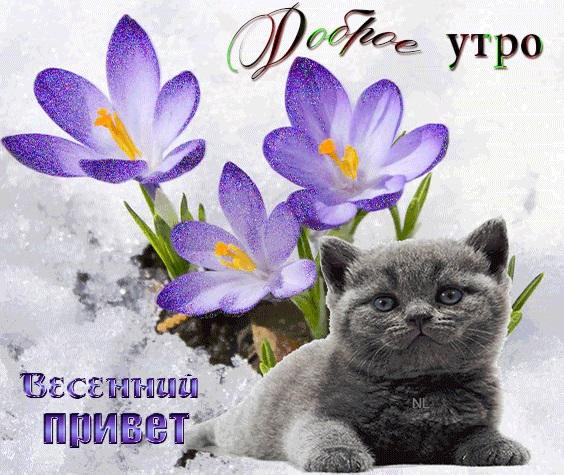 Привет с добрым утром открытка (1)
