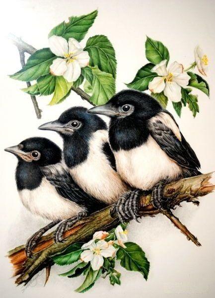 Рисунок птичка для вышивки (9)