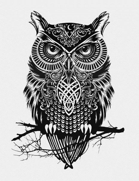 Рисунок совы в графике (14)