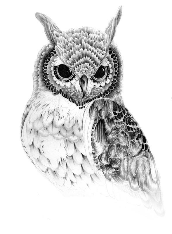 Рисунок совы в графике (15)